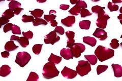 Rosa rossa degli ambiti di provenienza del primo piano sugli ambiti di provenienza bianchi Immagini Stock