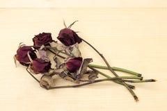 Rosa rossa della bruciatura sul fondo del compensato Fotografia Stock