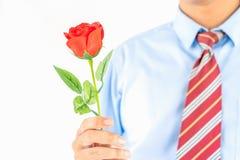 Rosa rossa della tenuta dell'uomo a disposizione su bianco fotografia stock libera da diritti