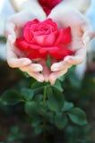 Rosa rossa della tenuta della ragazza in mani Fotografie Stock Libere da Diritti