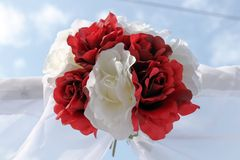 Rosa rossa di bianco fotografie stock libere da diritti
