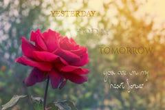 Rosa rossa di giorno di biglietti di S. Valentino fotografia stock