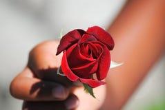 Rosa rossa a disposizione Fotografie Stock Libere da Diritti