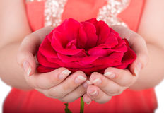 Rosa rossa a disposizione Fotografia Stock