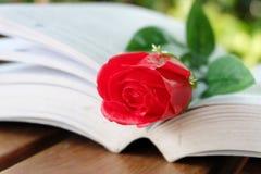 Rosa rossa ed il libro Immagine Stock