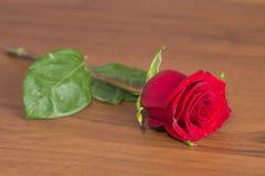 Rosa rossa fine Immagini Stock Libere da Diritti