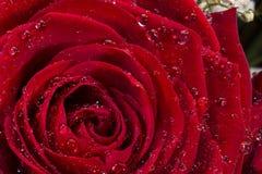 Rosa rossa - giorno di biglietti di S. Valentino Fotografia Stock Libera da Diritti