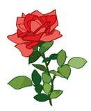 Rosa rossa - illustrazione della pianta Royalty Illustrazione gratis