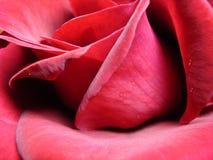 Rosa rossa irresistibile Fotografia Stock Libera da Diritti