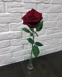 Rosa rossa isolata in un vaso Immagine Stock Libera da Diritti