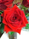 Rosa rossa luminosa in vaso Fotografia Stock