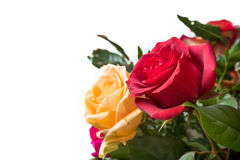 Rosa rossa nel bouqet Fotografia Stock Libera da Diritti