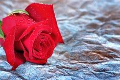 Rosa rossa nelle goccioline su un fondo blu immagini stock libere da diritti