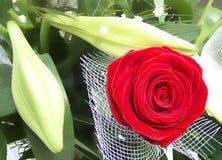 Rosa rossa rossa Immagini Stock Libere da Diritti