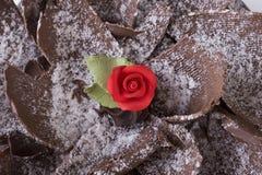 Rosa rossa squisita Immagini Stock