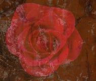 Rosa rossa strutturata Fotografie Stock