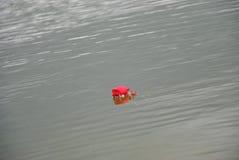 Rosa rossa su un'acqua Immagini Stock Libere da Diritti