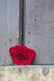 Rosa rossa su un bordo rustico Immagine Stock Libera da Diritti