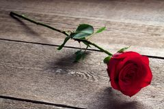 Rosa rossa su una tavola di legno Fotografia Stock
