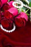 Rosa rossa su velluto Fotografia Stock Libera da Diritti
