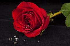 Rosa rossa su velluto nero con le goccioline di acqua Fotografie Stock