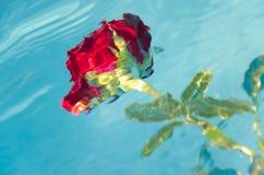 Rosa rossa subacquea Immagini Stock