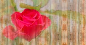 Rosa rossa sul concetto di legno d'annata del biglietto di S. Valentino del fondo Fotografia Stock