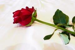 Rosa rossa sul letto Fotografia Stock