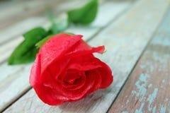 Rosa rossa sul pavimento d'annata Fotografia Stock