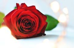Rosa rossa sul primo piano delle luci leggiadramente e del fondo blu-chiaro con spazio per testo fotografie stock