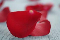 Rosa rossa sulla tavola di legno blu con la carta di carta dell'8 marzo e del regalo Immagini Stock
