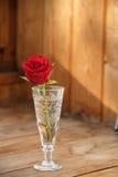 Rosa rossa in un rosso di vetro Rosa Immagine Stock