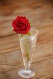 Rosa rossa in un vetro Rosso Rosa Fotografia Stock