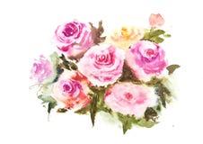 Rosa rosvattenfärgillustratör Arkivbilder