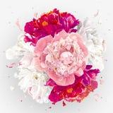 Rosa, rote und weiße Pfingstrosenzusammensetzung Lizenzfreie Stockfotos