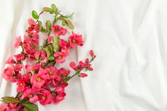 Rosa rugosa flowers on white fabric Stock Photo