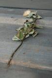 Rosa saiu em uma das casernas de madeira - Auschwitz Birkenau Fotografia de Stock
