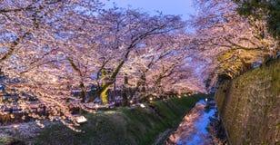Rosa sakura träd (Cherry Blossom) på skymning på den Kanazawa slotten Arkivfoto