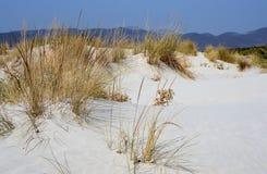 Rosa Sanddüne in Sardinien-Insel entlang dem Ufer lizenzfreies stockbild