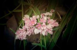 Rosa schönes helles der Orchidee Stockbilder