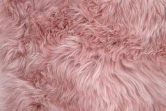 Rosa Schaffellwolldeckenhintergrundschafpelz Wollbeschaffenheit Stockbilder