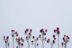 Rosa seca del rosa en fondo azul claro fotografía de archivo
