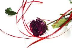 Rosa seca do vermelho com uma fita vermelha no fundo branco Imagens de Stock Royalty Free
