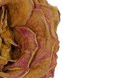 Rosa secada imagem de stock