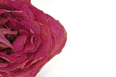 Rosa secada foto de stock royalty free
