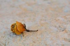 Rosa secada del amarillo en el fondo de piedra blanco Fotos de archivo