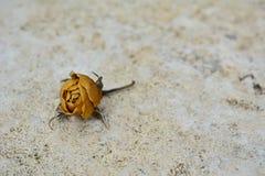 Rosa secca di giallo su fondo di pietra bianco Fotografia Stock