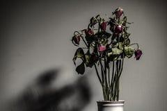 Rosa secou em um vaso cerâmico Esquerda na sala com sombras Foco macio imagens de stock