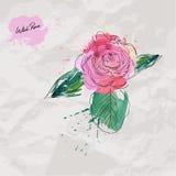 Rosa selvagem Imagens de Stock Royalty Free