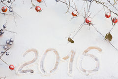 Rosa selvaggio ed il prugnolo si ramificano con i frutti nella neve Fotografia Stock